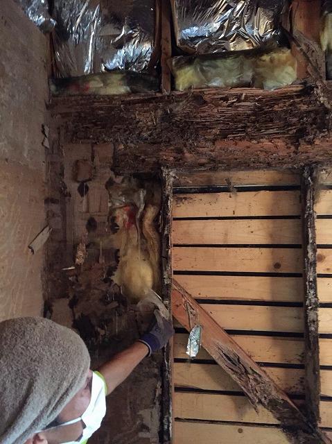 梁の腐り白蟻被害