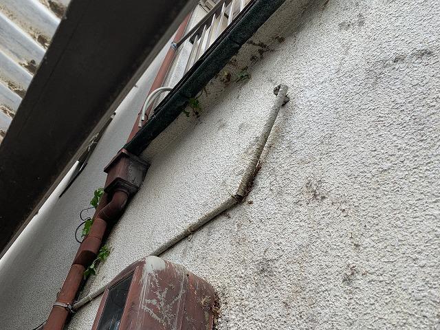 外壁つた撤去